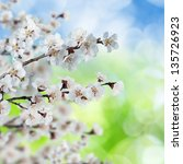 eco spring background  ... | Shutterstock . vector #135726923