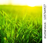 bright vibrant green grass... | Shutterstock . vector #135764927