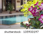 adenium flowers by swimming... | Shutterstock . vector #135933197