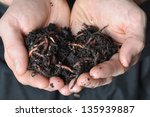 group of earthworms in hands | Shutterstock . vector #135939887