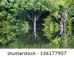 rainforest in amazon  manaus ... | Shutterstock . vector #136177907