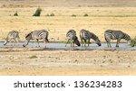 wild zebra | Shutterstock . vector #136234283