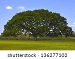 Huge tree in the middle of a green field with a blue sky - stock photo