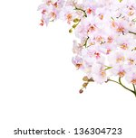 light pink orchid flowers... | Shutterstock . vector #136304723