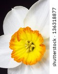 Close Up White And Orange...