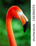 Closeup Of A Flamingo Face