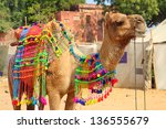Pushkar Camel Fair - decorated camel during festival in Pushkar India - stock photo