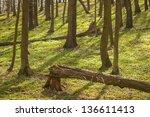 spring forest | Shutterstock . vector #136611413