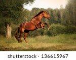 Beautiful Bay Horse Rearing Up...
