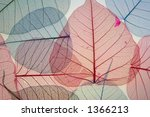 blue and red leaf veins | Shutterstock . vector #1366213