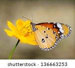 Monarch Butterfly  Seeking...