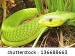 Green Mamba Snake