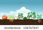 vegetable garden. jpg | Shutterstock . vector #136767647