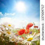 Stock photo field of daisies sky and sun 137009717