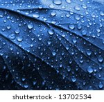 Fresh Water Drops on Blue Plant Leaf - stock photo
