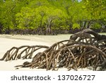 mangrove and roots on sand ...