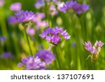 summer wildflowers on a field and meadows - stock photo
