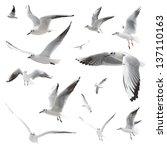 Birds Isolated On White