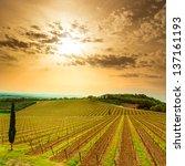Chianti Region  Vineyard  Tree...
