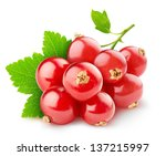 Isolated Berries. Red Currant...