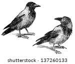 crow | Shutterstock . vector #137260133