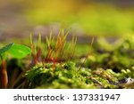young colorful grass in spring