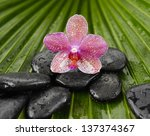 macro of gorgeous orchid with... | Shutterstock . vector #137374367