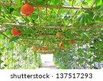 Grow Sturdily Pumpkin In A...