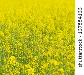 colza | Shutterstock . vector #137554133