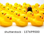yellow ducks of gum and one black - stock photo