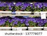 Bluebells Flowers  Campanula...