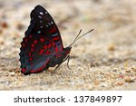 beautiful butterfly in the... | Shutterstock . vector #137849897