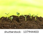 green seedling growing from... | Shutterstock . vector #137944403