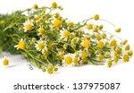 medical chamomile on white... | Shutterstock . vector #137975087