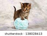 Stock photo kitten play with wool brown blue ball large fun 138028613