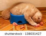 Stock photo kittens sleeping after meals in a bowl 138031427