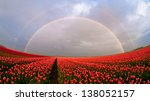 Rainbow Tulip Field