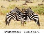 Zebras On The Masai Mara In...