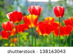 red  yellow tulips in a... | Shutterstock . vector #138163043