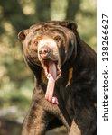 Sun Bear Yawning At The Omaha...