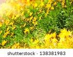 Many Beautiful Yellow...