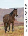 Wild Horse In Monument Valley ...