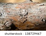 Постер, плакат: trunk with woodworm in