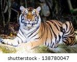 amur tigers | Shutterstock . vector #138780047