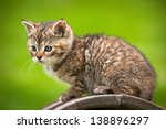 Stock photo cat 138896297