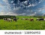 cows grazing on a green lush...