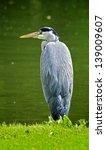 grey heron sitting on the water'... | Shutterstock . vector #139009607