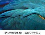 Beautiful Flight Feathers Of A...