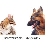 Stock photo long haired german shepherd dog and a cat 139095347