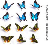 Stock photo blue and colorful butterfly isolated on white background 139189643